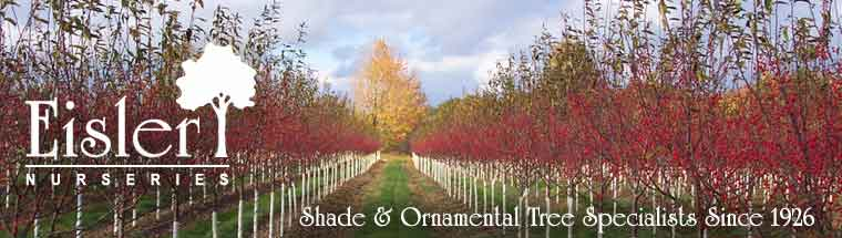 Eisler Nurseries: Shade and Ornamental Tree Specialists Since 1926